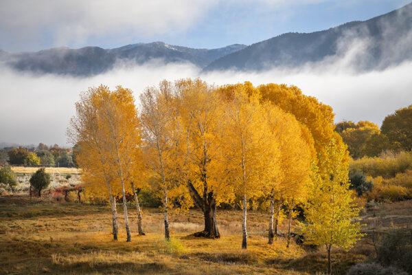 san cristobal valley fall 2265