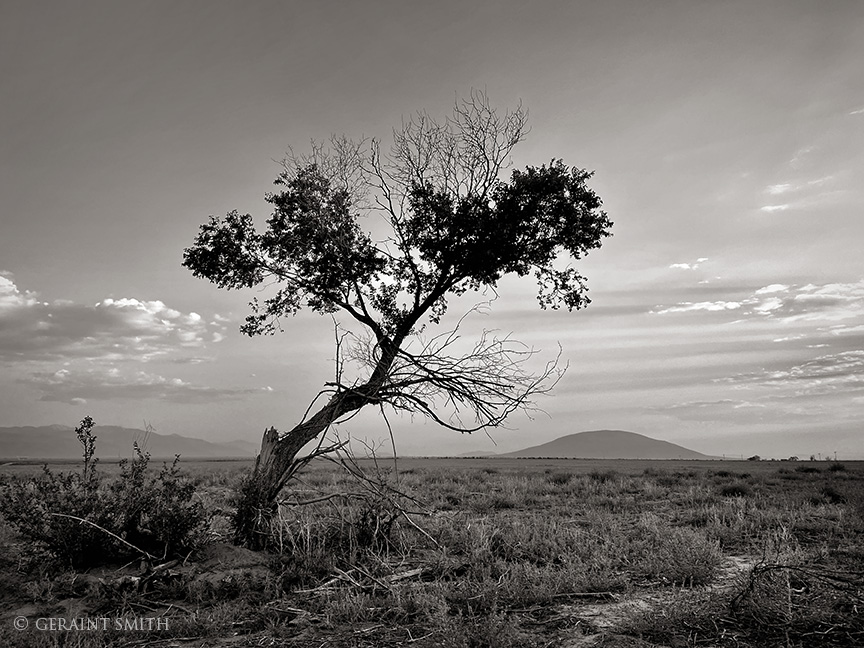 Lone Tree, Ute Mountain, San Luis Valley