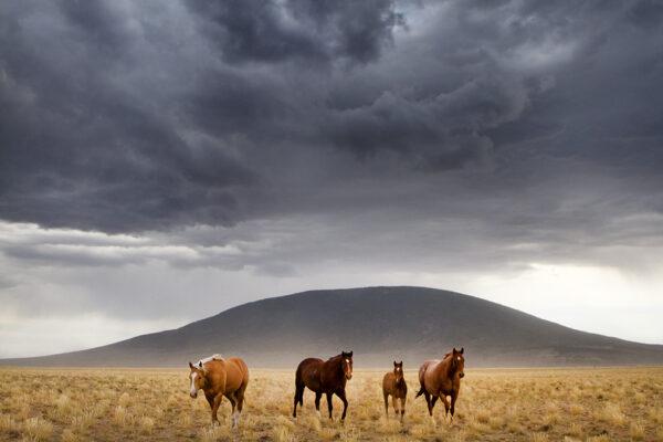ute mtn horses 1165