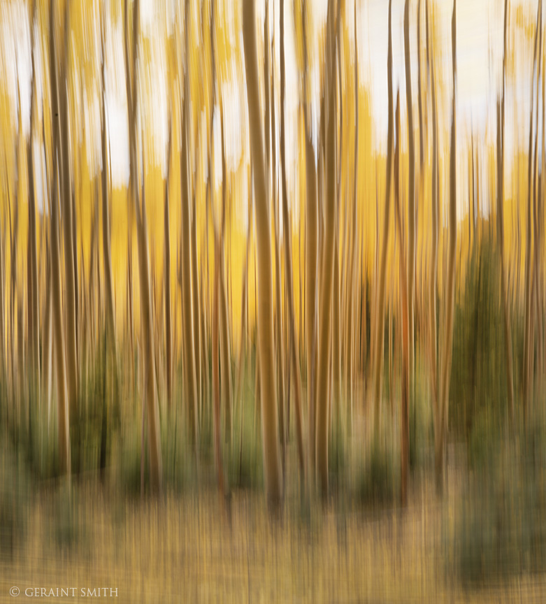 Abstract impressionism in the aspens, New Mexico.