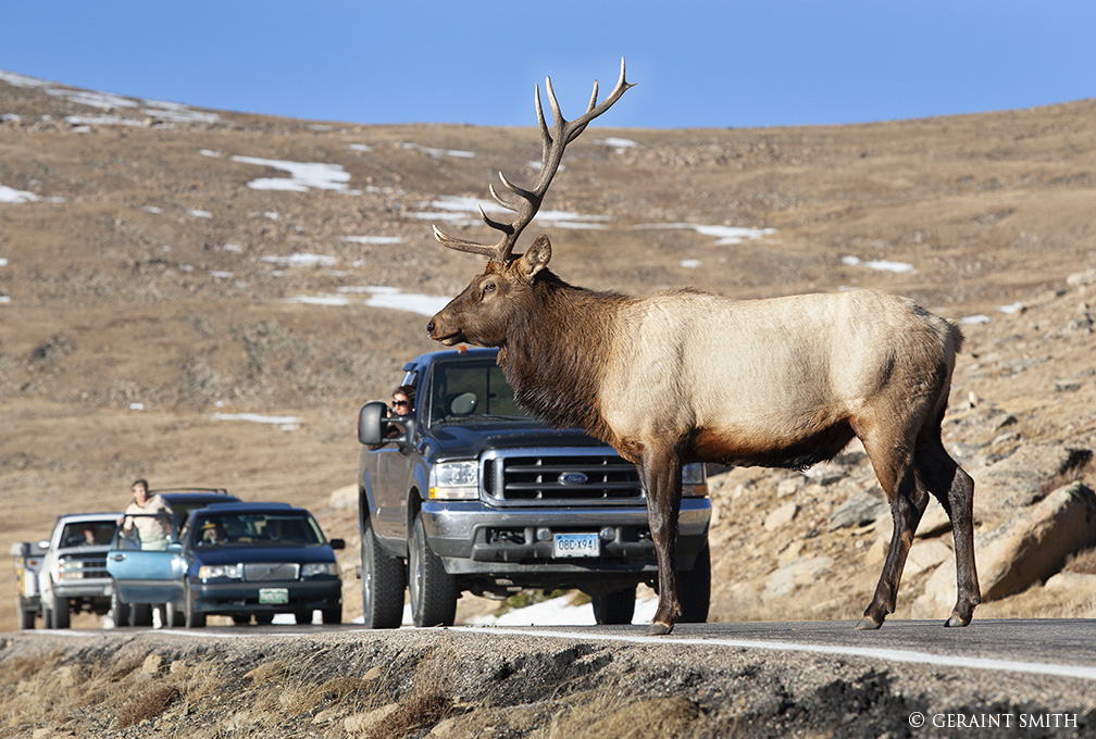 Traffic halt, Rocky Mountain National Park, Colorado