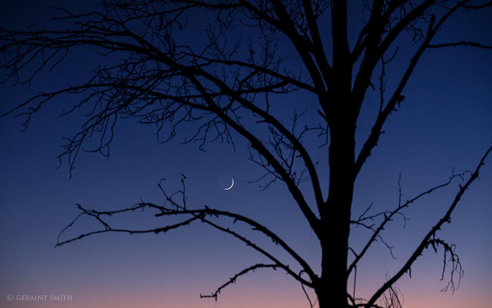 La Luna, Earth Shine, Old Cottonwood Tree