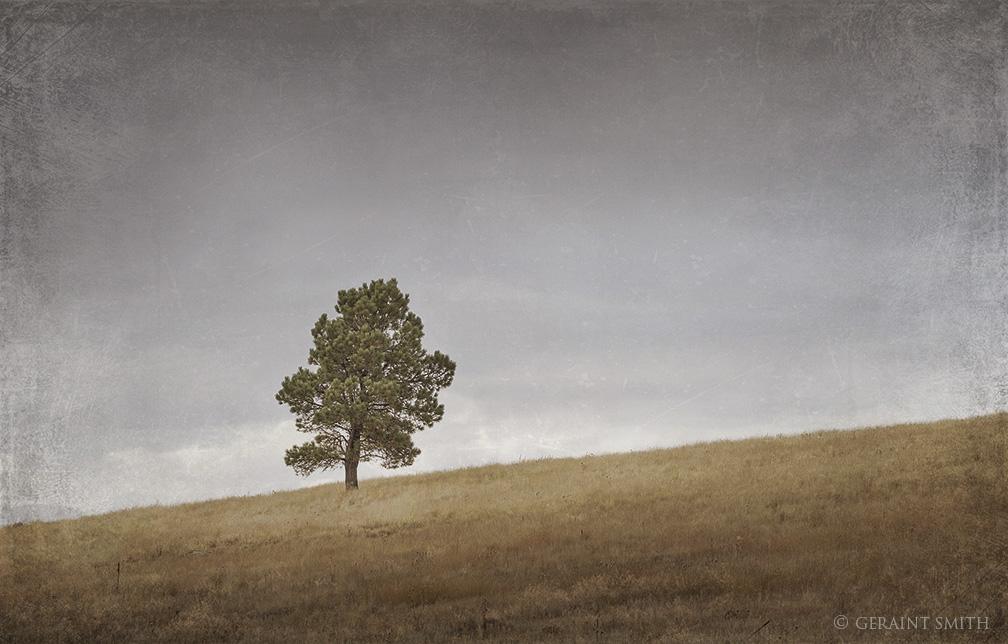 Lone Tree, Black Lake, New Mexico