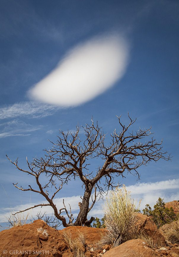 tree_cloud_ghost_ranch_3693-2146749