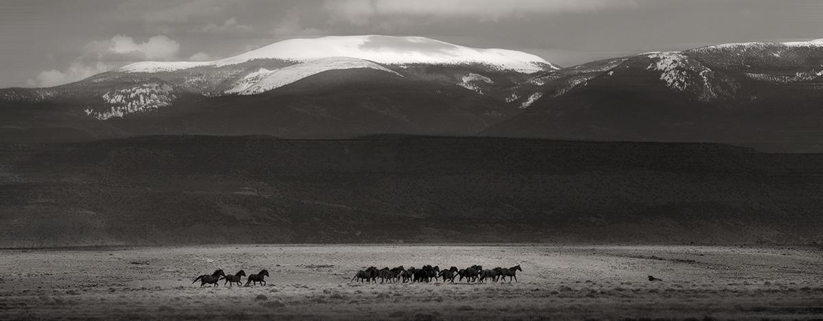wild horses sepia blur 7785