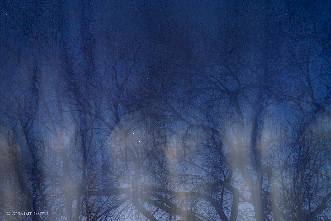 night_tree_blur_4495-1-4481685