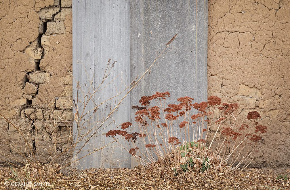 yarrow_tin_adobe_wall_mora_0924-6735262