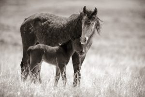 Chaco, Horse and Foal