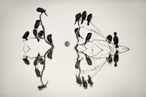 Cormorants Roost