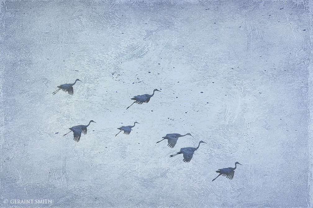 Sandhill Cranes, Bosque del Apache, (Woods of the Apache).