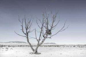 Hawk Nest Tree