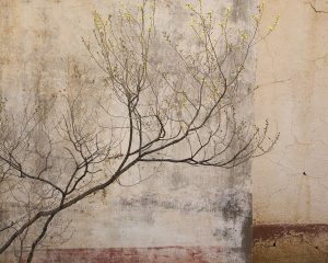 Tree, Wall Patina
