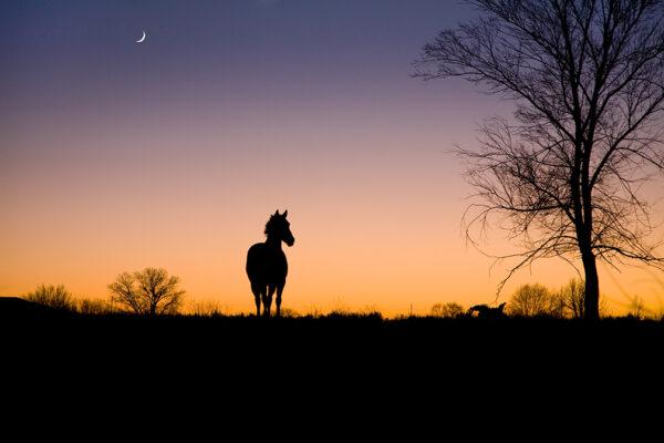 Horse, Moon, Sunset