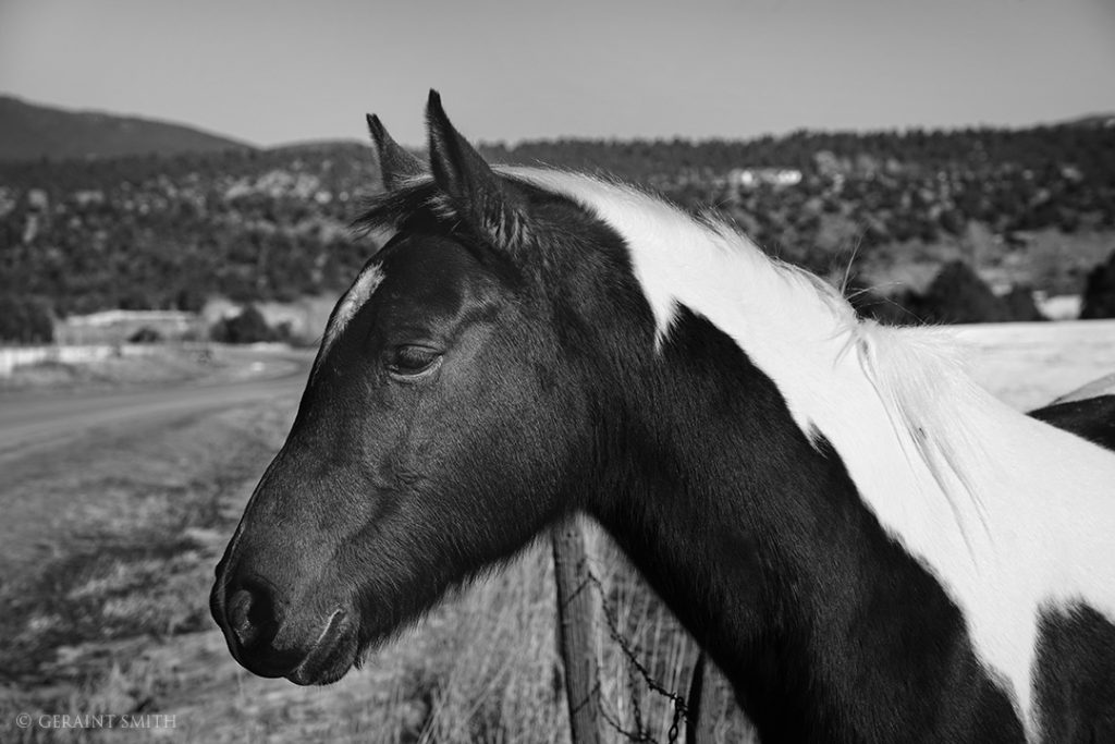 Pinto Horse posing on the High Road to Taos