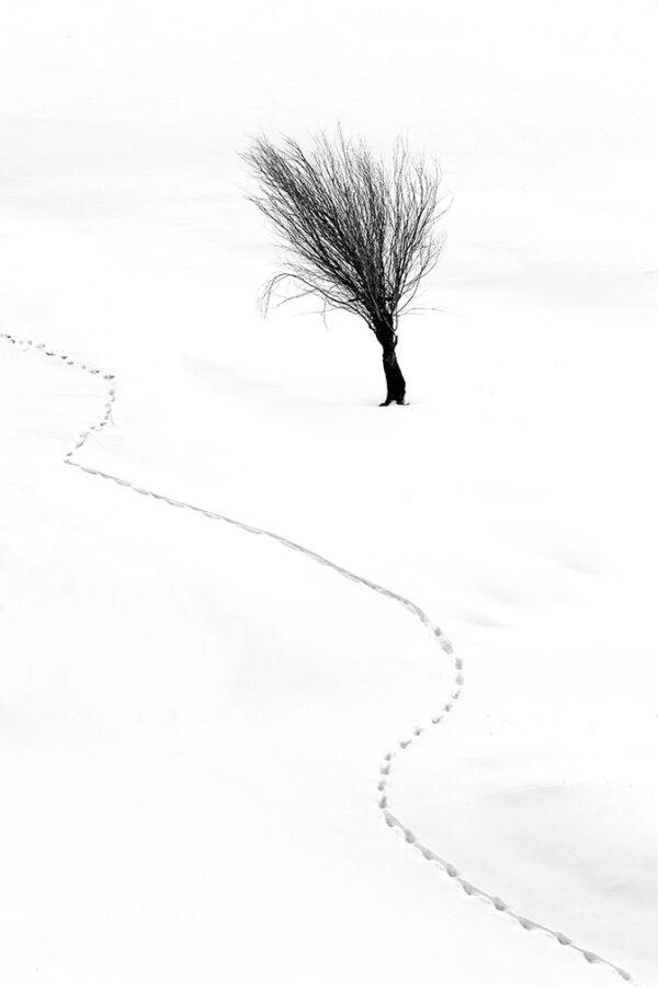 Snow bush animal tracks