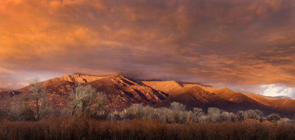 Taos Mountain Willows, Cottonwood, Sunset