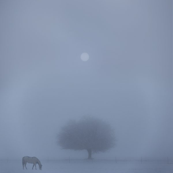Horse tree, fog San Luis Valley