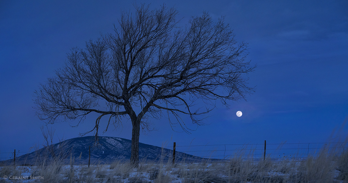 Ute Mountain, a tree, with the Wolf Moon setting.