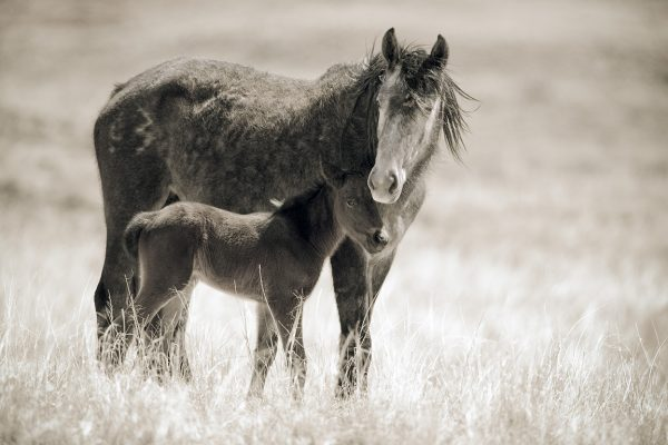 Chaco Horses, Mare and Foal