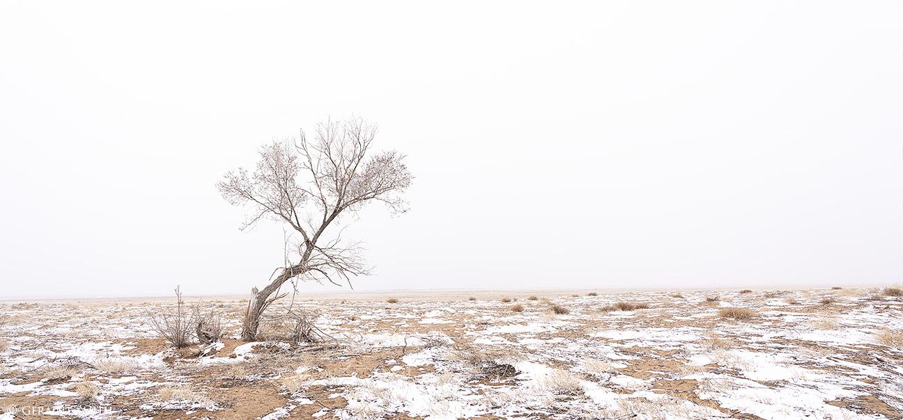 Lone Tree, San Luis Valley, Colorado