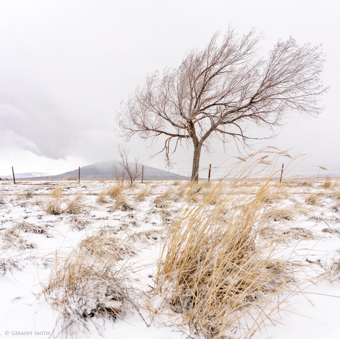 Ute Mountain Tree