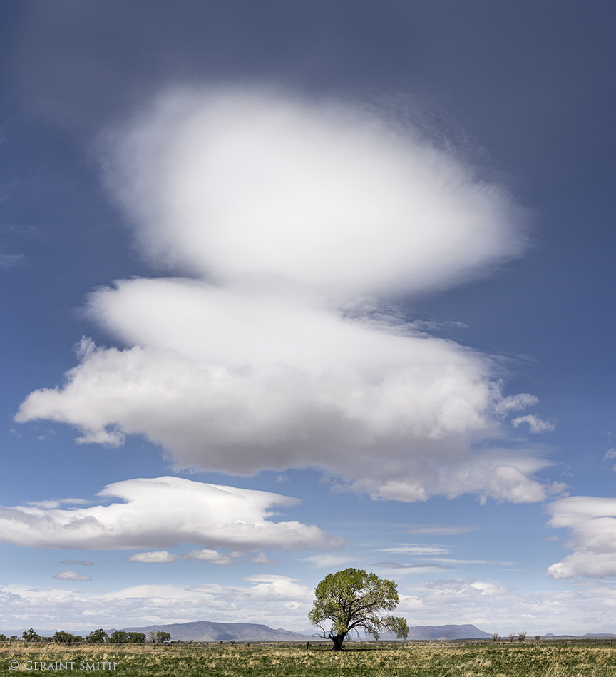 San Luis Valley tree and clouds