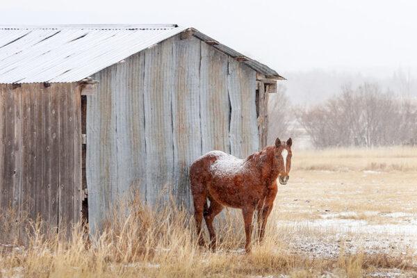 Horse Shelter, Ranchos de Taos