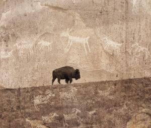 Bison and Petroglyphs